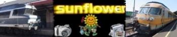 Sunflower's web